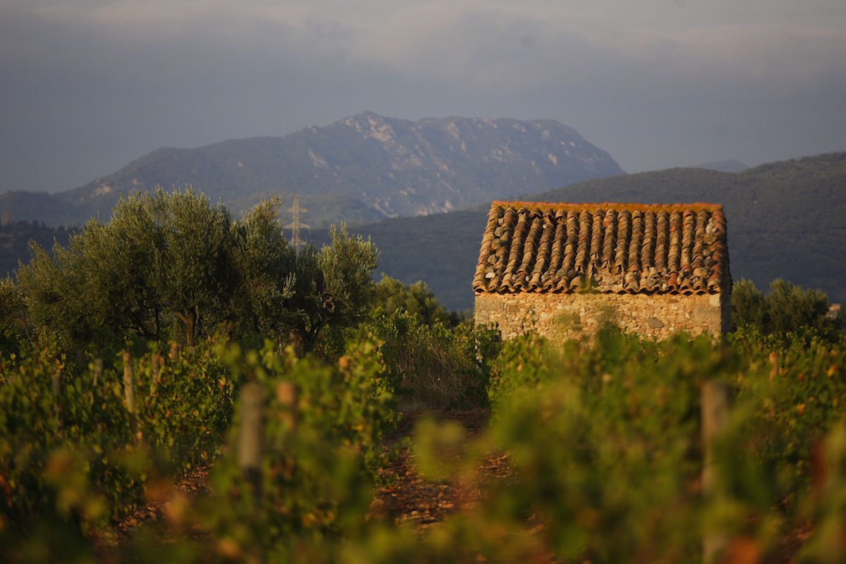 La Pèira, Grange des Pères, and Domaine Gauby's Muntada in the Wall Street Journal's Languedoc-Roussillon tasting by Jay McInerney La Peira