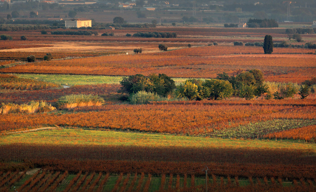 Jancis Robinson: La Peira vertical 2005-2013 and other Languedoc treasures